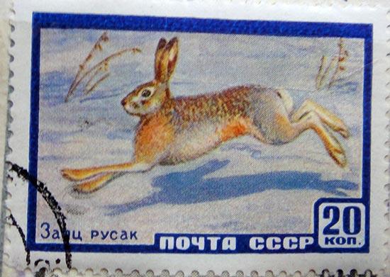 Заяц русак. Почта СССР, 20 копеек
