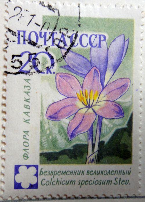 Флора Кавказа: Безвременник великолепный (Colchicum speciosum Stev.)