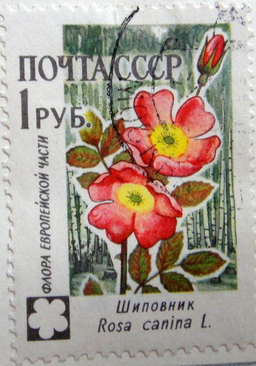 Шиповник Rosa canina L. (Флора европейской части). Почта СССР, 1 рубль
