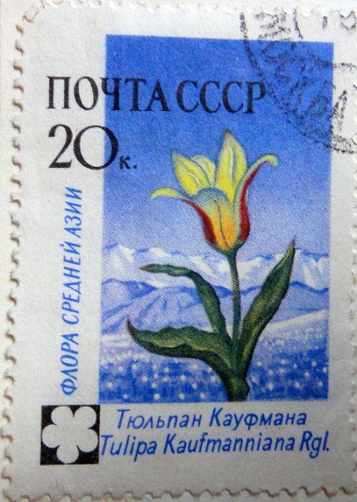 Тюльпан Кауфмана (Tulipa Kaufmanniana Rgl.) Флора Средней Азии