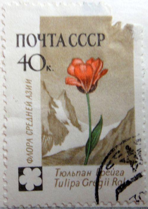 Тюльпан Грейга (Tulipa Greigii Ral.) Флора Средней Азии