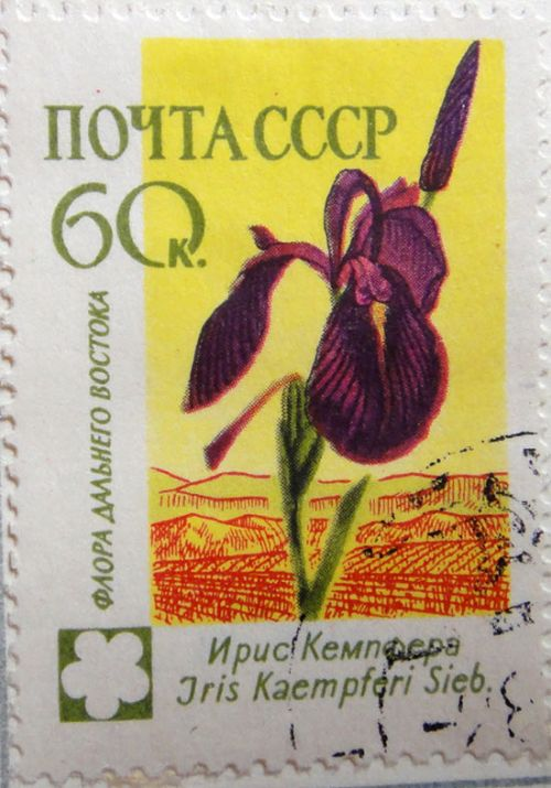 Ирис Кемпфера (Iris Kaempferi Sieb.) Флора Дальнего Востока