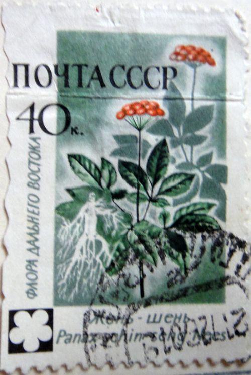 Жень-шень (Panax L.) Флора Дальнего Востока