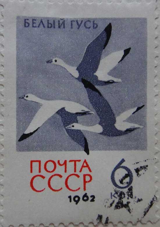 Белый Гусь. Почта СССР, 1962, 6коп